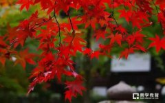 送给孩子描写秋天的诗词佳句推荐,语文作文描写秋天全靠这些了