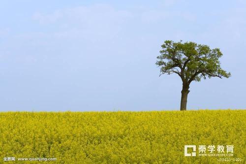 描写春天的写景抒情作文分享:《美丽的春天》