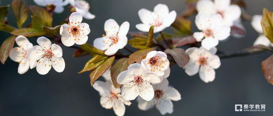 """""""今夜偏知春氣暖""""的后一句是什么?作者寫的是哪個季節的景色?"""