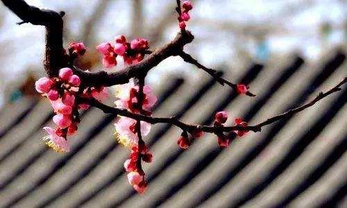 """""""一枝红杏出墙来""""为什么能成为千古名句?这首诗主要表达的是什么呢?"""