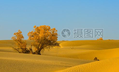 为什么一统天下的不是赵国呢?赵国跟秦国有什么不同?
